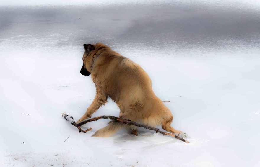 duke-on-ice